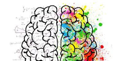 Langzeitgedächtnis Kurzzeitgedächtnis Brain
