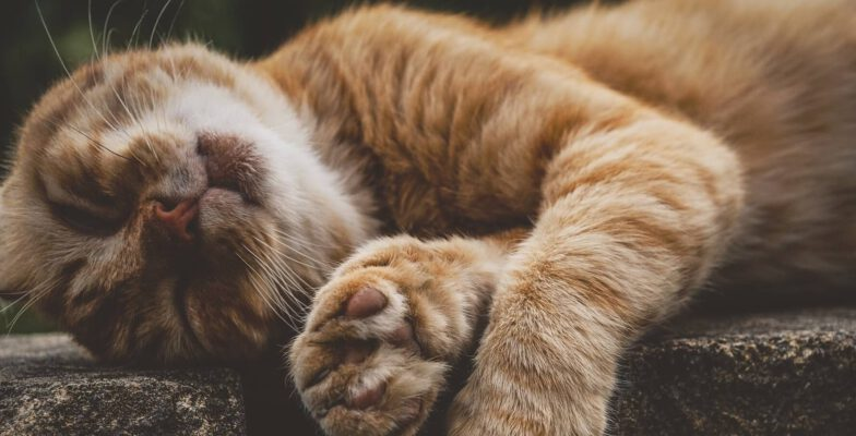 5 Tipps für einfaches und entspanntes Lernen Katze