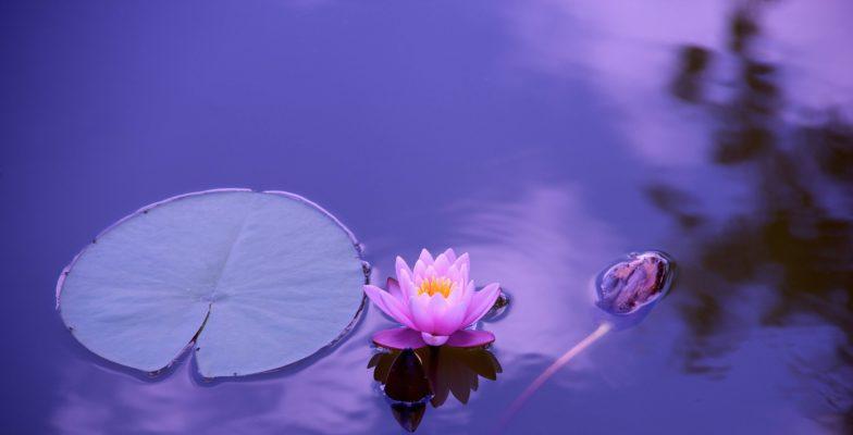 10 Lernorte zum entspannten Sprachenlernen Lotus
